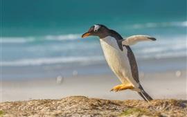Preview wallpaper Gentoo penguin jumping