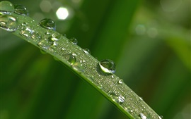 Preview wallpaper Grass blade leaf, water droplets