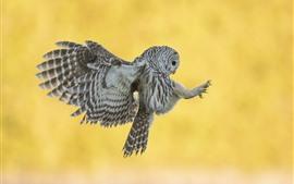 壁紙のプレビュー グレーフクロウの飛行、翼