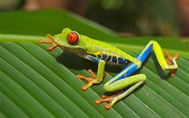 Preview wallpaper Green frog, leaf