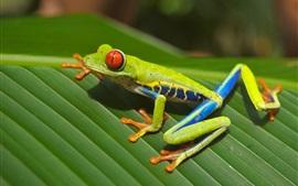 미리보기 배경 화면 녹색 개구리, 잎