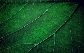 Preview wallpaper Green leaf macro photography, texture