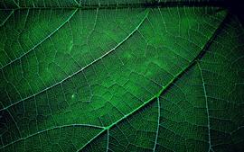 Aperçu fond d'écran Feuille verte photographie macro, texture