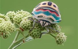 Макросъемка насекомых, ошибка, зеленые цветы