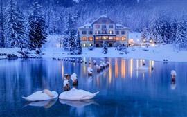 Preview wallpaper Italy, Alps, swans, pond, forest, snow, house, lights