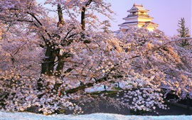 미리보기 배경 화면 일본, 후쿠시마, 아이즈 와카 마츠, 사쿠라, 사원