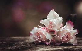Светло-розовые розы, размытый фон