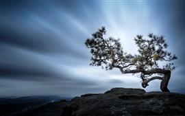 Pinheiro solitário, topo da montanha, nuvens