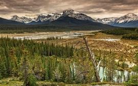 Montañas, valle, bosque, árboles, río