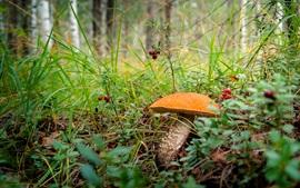 Preview wallpaper Mushroom, boletus, berries, grass