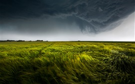 Nature, green field, storm, dark clouds, lightning