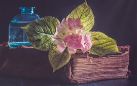 Preview wallpaper Old book, pink flowers, leaves