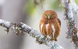 Preview wallpaper Orange color owl, tree