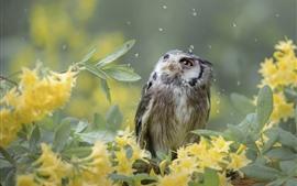 Preview wallpaper Owl, rain, yellow flowers