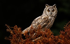 Owl, tree, black background