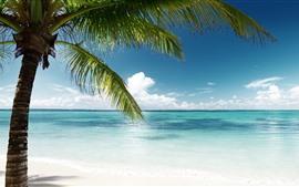 Palm tree, green leaves, sea, blue, tropic