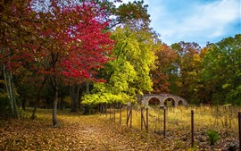 Park, trees, fence, bridge, autumn