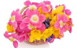 Pink and yellow flowers, white background