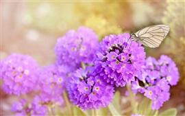Flores cor de rosa, borboleta, primavera