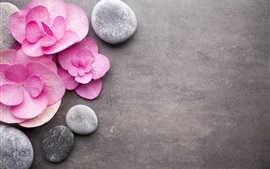 Preview wallpaper Pink flowers, stones, SPA theme