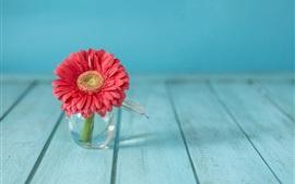 Flor gerbera rosa, vaso de vidro