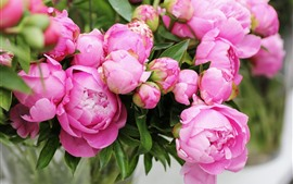 Preview wallpaper Pink peonies, bouquet, flowers
