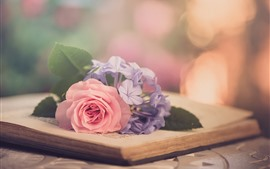 Preview wallpaper Pink rose, purple flowers, book, hazy