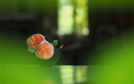預覽桌布 粉紅玫瑰,碗,綠色朦朧