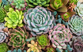 Plants, succulents, houseplants