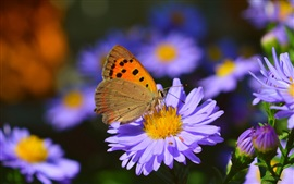 Purple flowers, butterfly, blurry background