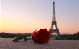 Rose rouge, tour eiffel, paris