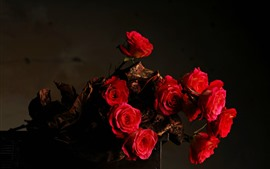 Красные розы, темнота