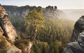 미리보기 배경 화면 색슨 스위스, 엘베 계곡, 독일, 산, 소나무
