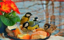 Algunas aves comen torta, flores