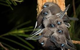 Alguns pássaros cinza