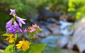 Flores de primavera, violeta, rosa, amarillo