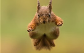 Preview wallpaper Squirrel jumping, blurry background