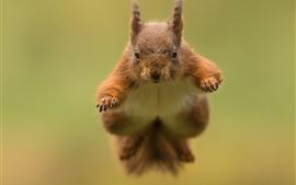 Esquilo saltando, fundo desfocado