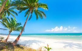 Verão, praia, palmeiras, mar