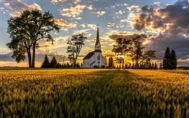 夏、小麦畑、教会、樹木、日の出、朝