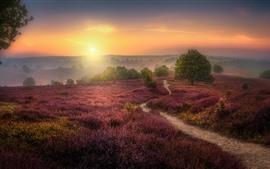 Puesta de sol, flores silvestres, colinas