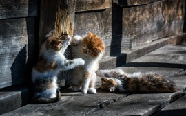 Tres gatos juguetones