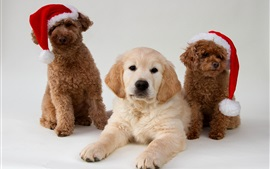 Preview wallpaper Three cute dogs, Christmas hat