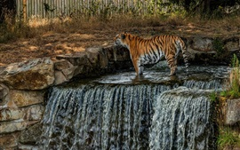 Preview wallpaper Tiger, waterfall, water, zoo