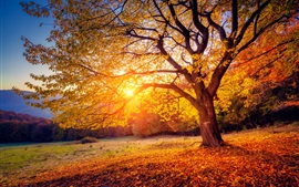 Preview wallpaper Tree, sunset, sunshine, autumn