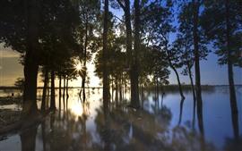 Árboles, río, reflejo de agua, puesta de sol