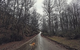 Trees, wet road, dog