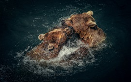 Preview wallpaper Two brown bears playful in water