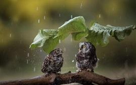 Duas corujas bonitinha, guarda-chuva de folha verde, chuva