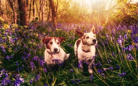 Preview wallpaper Two dogs, flowers, nature, sun rays